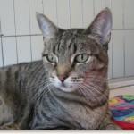 Happy Tails: Sheba