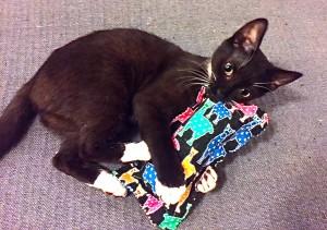 Zuzu and Cat Toy